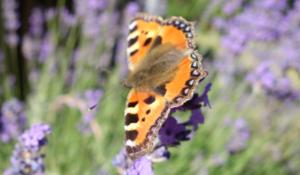 Vild natur i haven